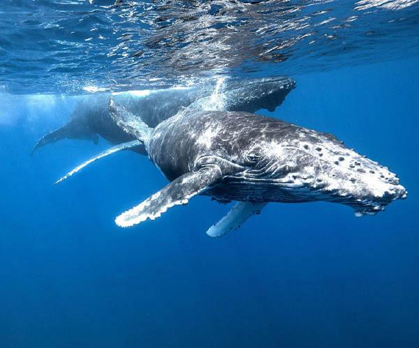 海钓/观鲸/巡游/潜水探秘深海
